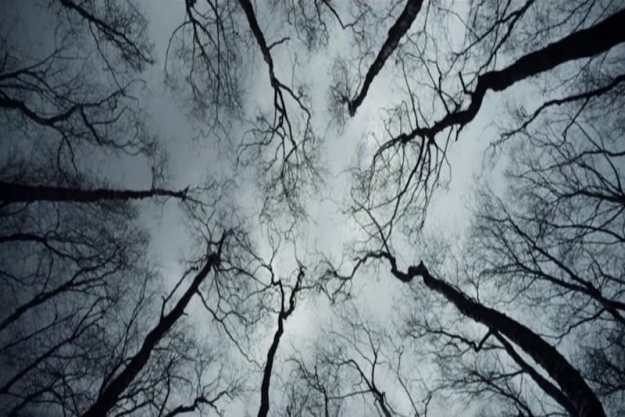 wn-trees