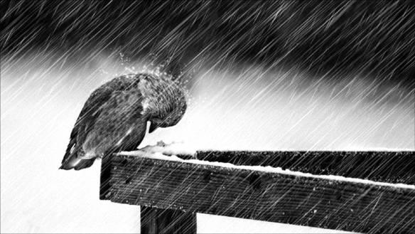depressing cold