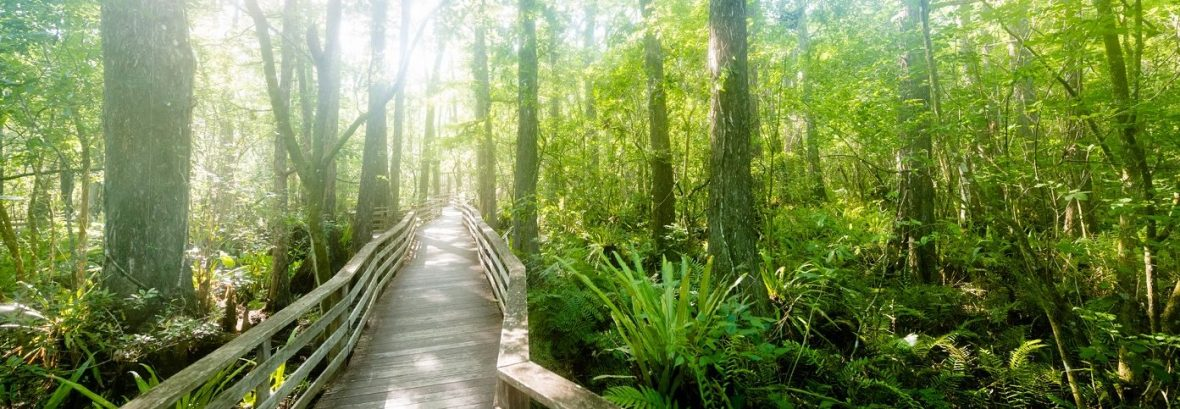 Bridge with sunshine in trees.