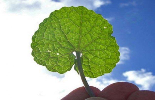 La fotosintesi artificiale spingerà i motori del futuro! di Daniele Parlante