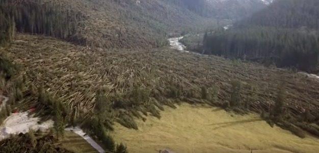 La tragedia del Veneto e la decimazione delle foreste care a Papa Giovanni I: quasi precisamente ad un secolo dalla fine della grande guerra…