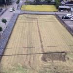 2014稲刈り