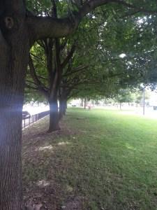 Trees lining Leslie Grove