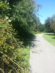 Betty Sutherland Trail (5)