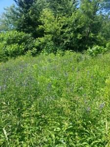 24. Wildflower Preserve