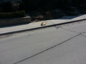 31. Pears Avenue Cat