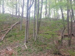 18. David Balfour Park Trail