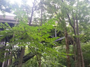 Vale of Avoca bridge 1