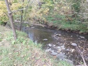 Birkdale Ravine 6