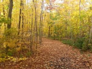 L'Amoreaux North Park Passmore Forest 1
