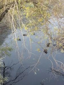 L'Amoreaux North Park West Highland Creek 2