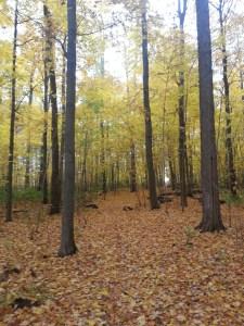 Brimley Woods Park 4