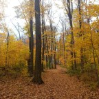 Scenes From Brimley Woods Park
