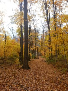 Brimley Woods Park 7