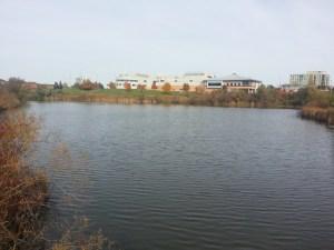 L'Amoreaux North Park Pond 2
