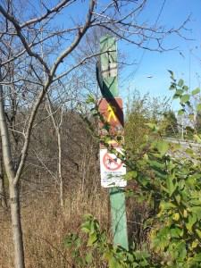 Massey Creek Trail (1)
