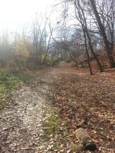 Taylor Creek Trail (2)