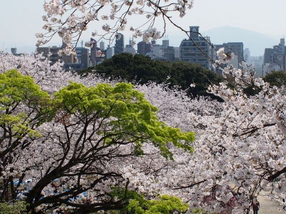 西公園・桜