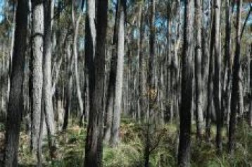 Forest near Mallacoota 3