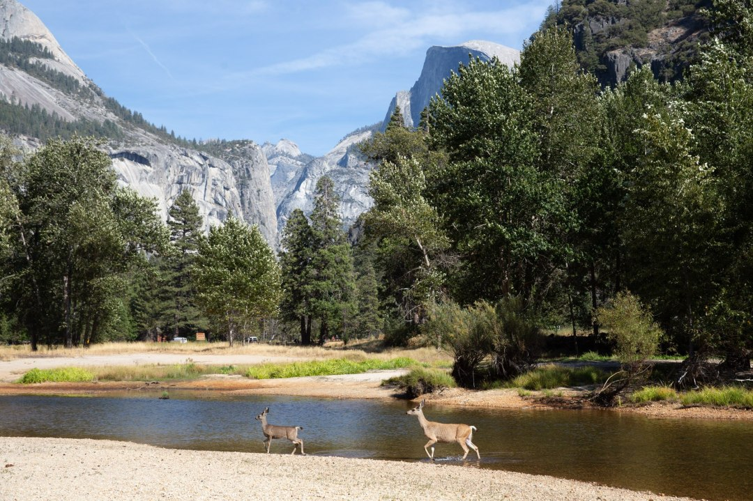 Yosemite has so many amazing spots for your intimate wedding -- this one is a stone throw from the car park!