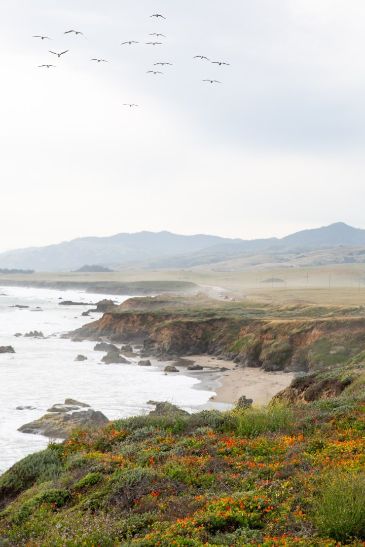 Looking out at the Big Sur coastline among the wildflowers and seabirds sea, a layer slowly lifts as the sun warms up the air.