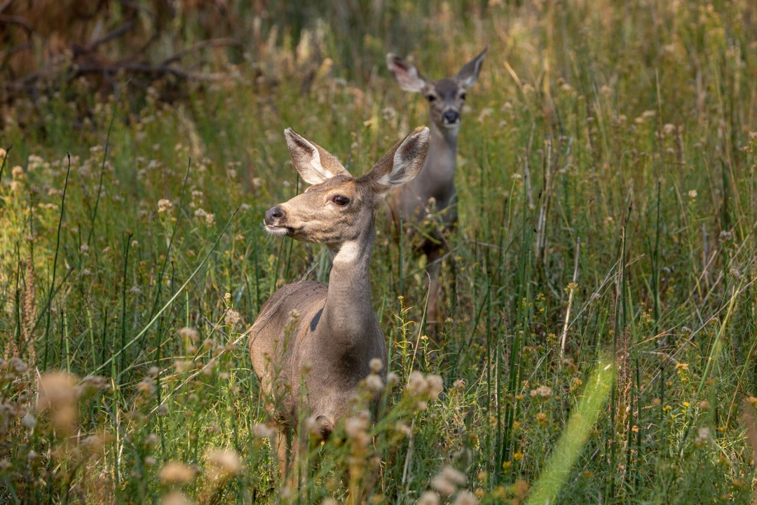 These deer kept photobombing this intimate wedding ceremony, only in Yosemite!