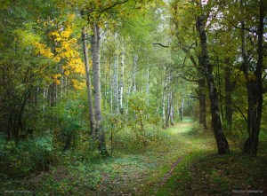 Rusian_Forest