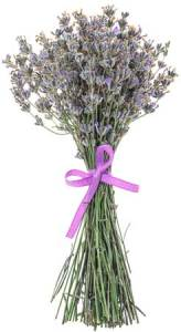 Using Lavender to Calm Down