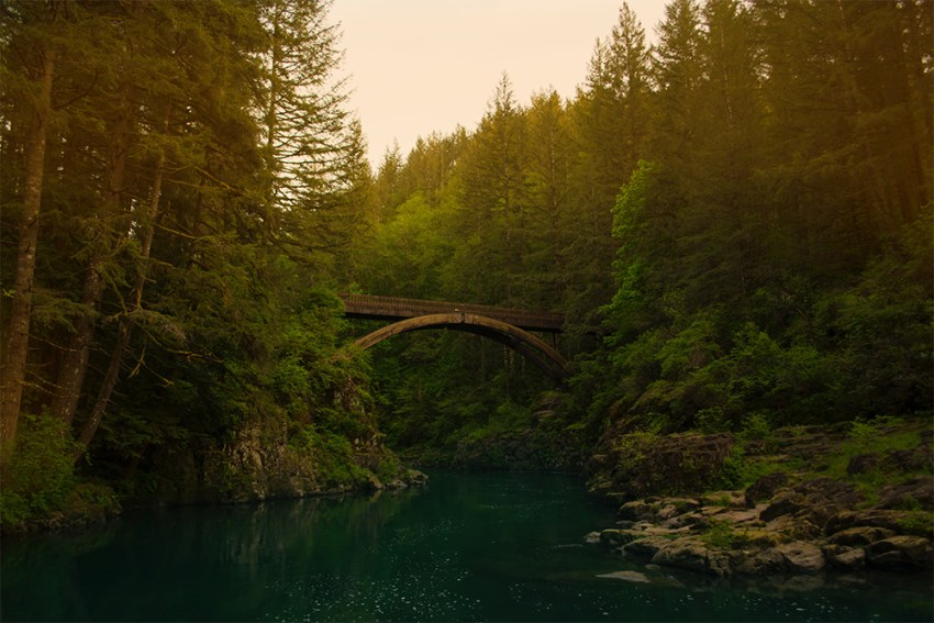Photo of bridge in a forrest
