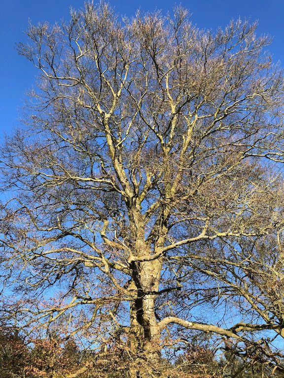 Winter beauty of a bare branch treet: Fay Young