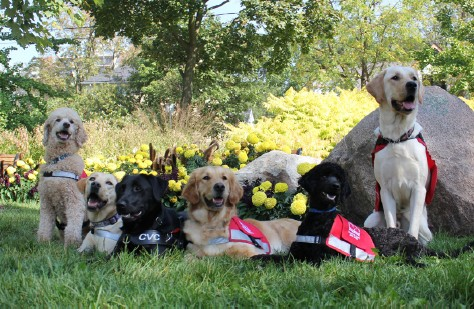 Photo of A Pack of Dog Guides
