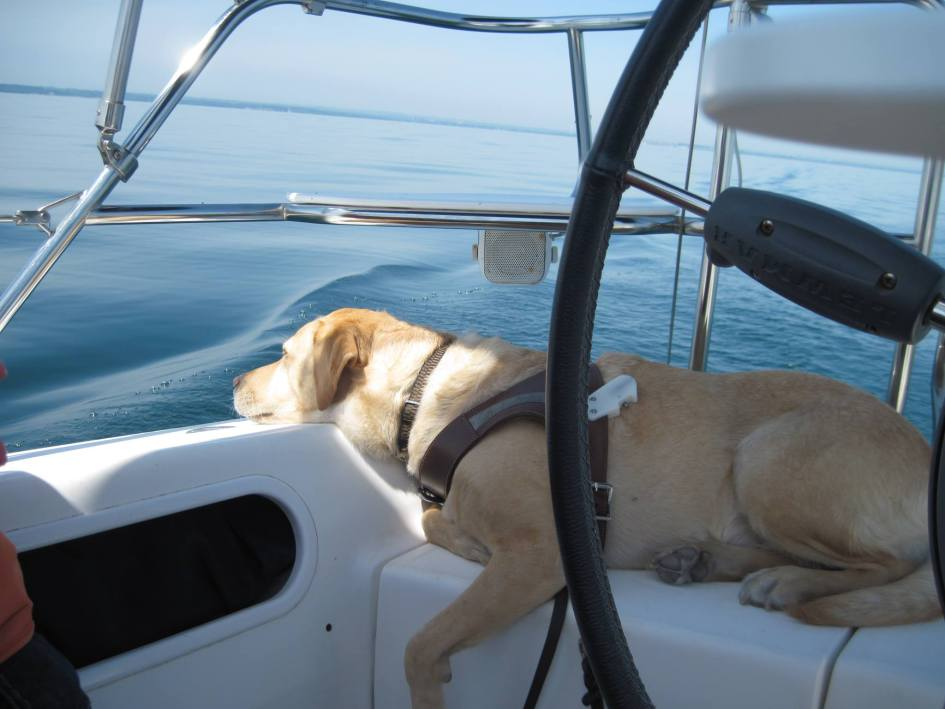 Photo from Blind Sailing Canada. An off-harness service dog sleeping on a boat