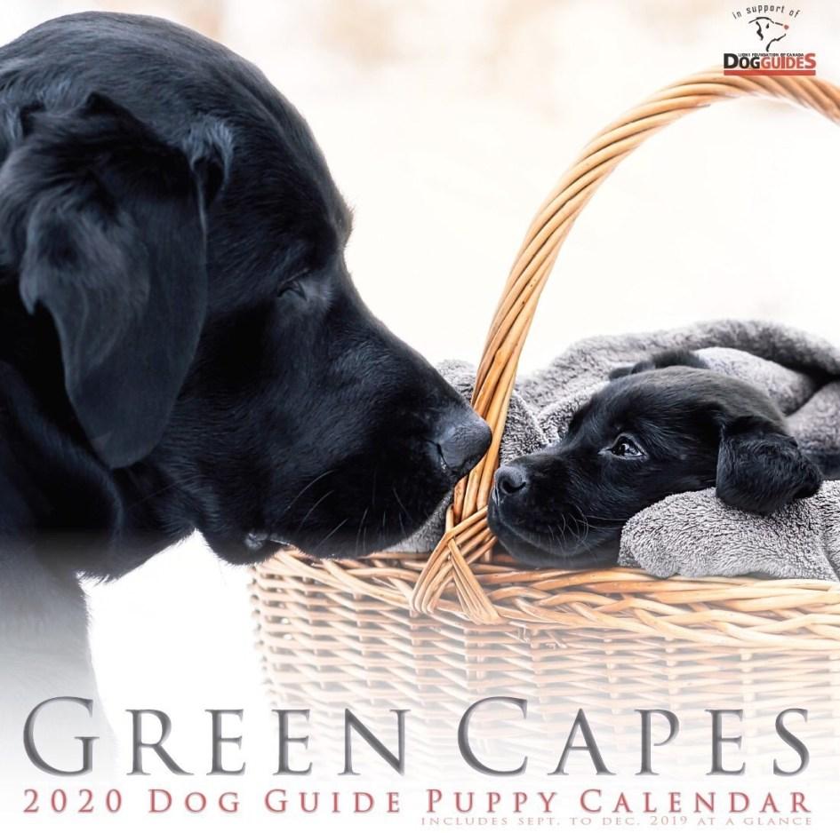 Photo of Puppy Calendar cover