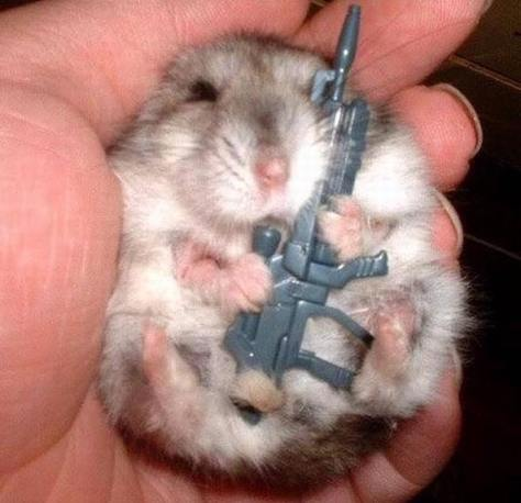 hamsterkäufe1