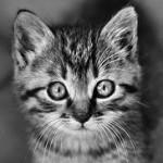 Profilbild von Pinky