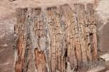 Teile eines alten Stauwehres des Nesenbaches aus Eichen und Nadelhölzern. Alter noch unbestimmt.
