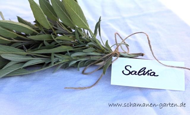 Salbei - Heilwirkung