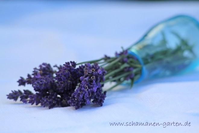 Heilwirkung Lavendel