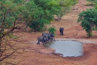 12.11. Fahrt durch das Okavango Delta nach Savuti