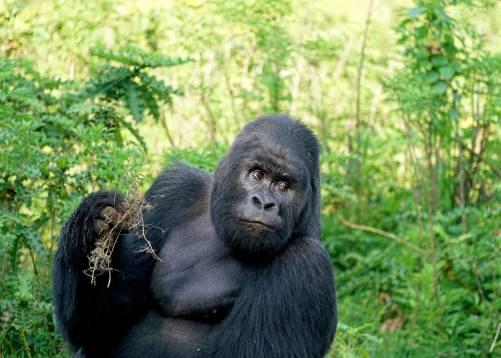 """Uganda – """"Die Perle Afrikas"""""""
