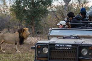 Private Safari im Krüger NP