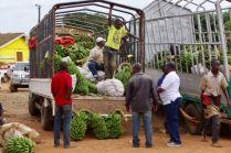 IMG 0007 - Jörg Scharff unterwegs in  Uganda und Tansania  (1.Teil)