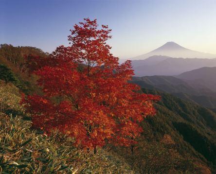 Im Land der aufgehenden Sonne - Die Höhepunkte Japans