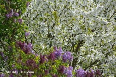 schöner April