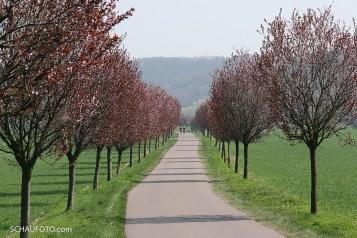 Das Bild ist von 2009 - heute gibt es dort keine Bäume mehr.