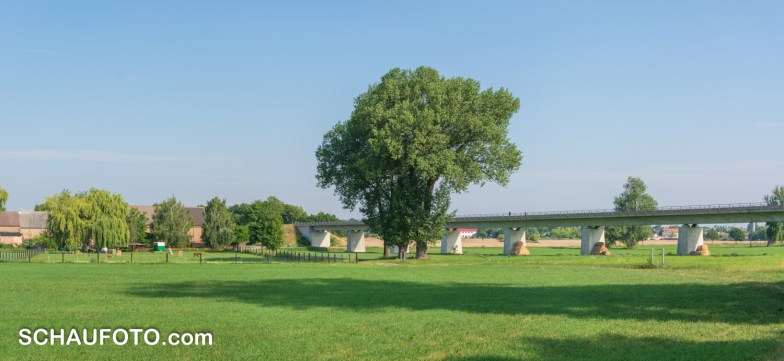 Baumriesen vor Bahnbrücke