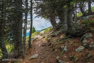 Uriger Weg an der Baumgrenze.