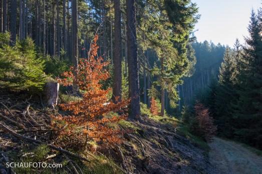 Thüringer Wald II