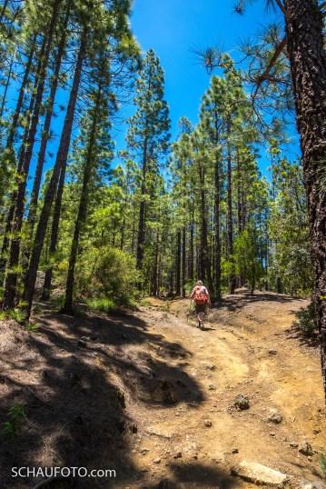 lichter Wald, fast völlig ohne Unterholz