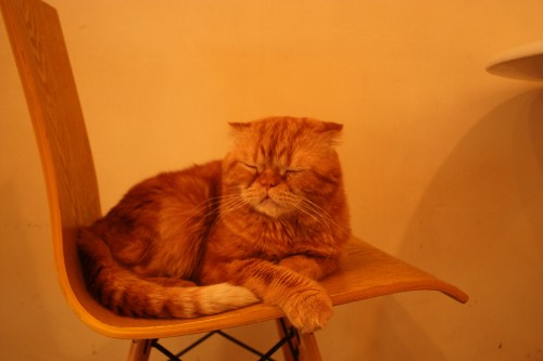Cats Living-6